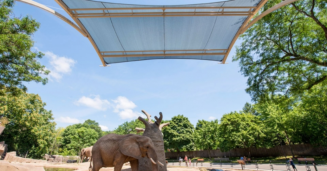 elephant zoo shade cantilever